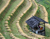 The Photo of Terraces of Longsheng