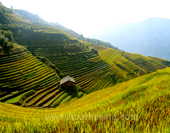 Overlook the Terraces of Longsheng