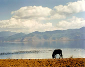 lugu lake Picture
