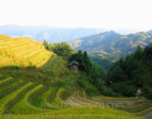 The Picture of Terraces in Longsheng