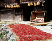 The Red Pepper and Maize of Longsheng